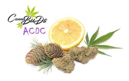 ACDC CBD Indoor Blüten Cannabuds