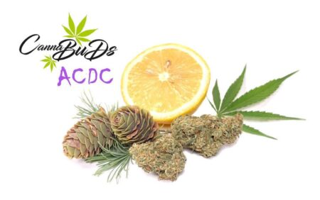 ACDC CBD Indoor Buds Cannabuds