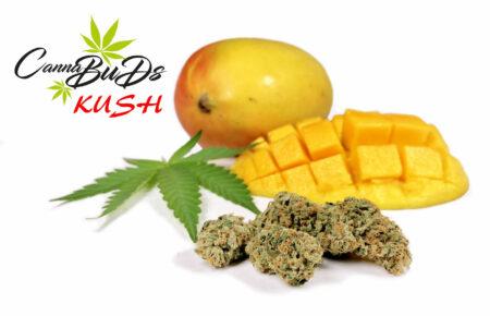 KUSH CBD Indoor Cannabis